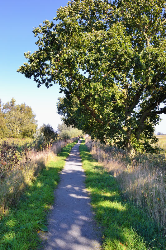 Footpath along Fleet Dyke at South Walsham