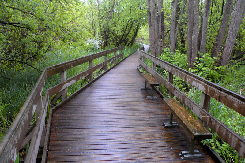 Heron's Carr Boardwalk
