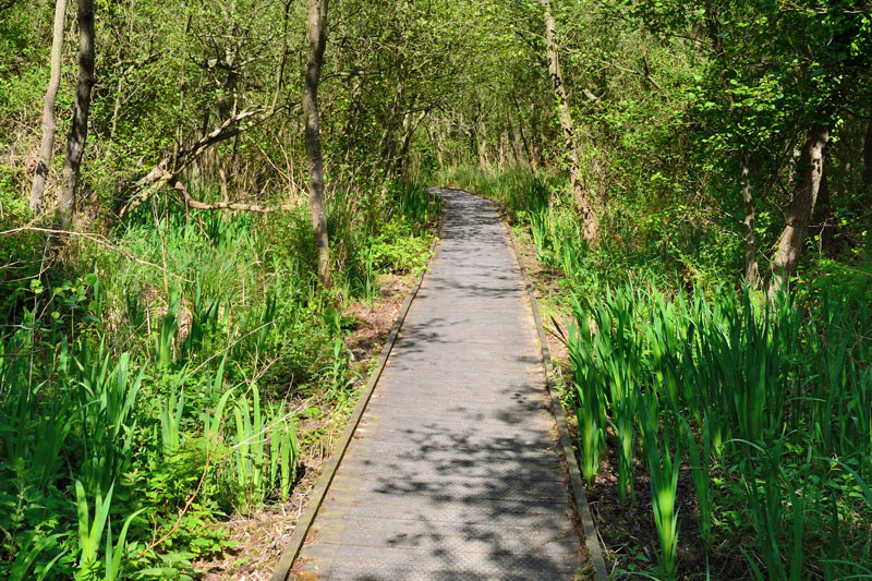 Boardwalk from Paddy's Lane to Barton Turf